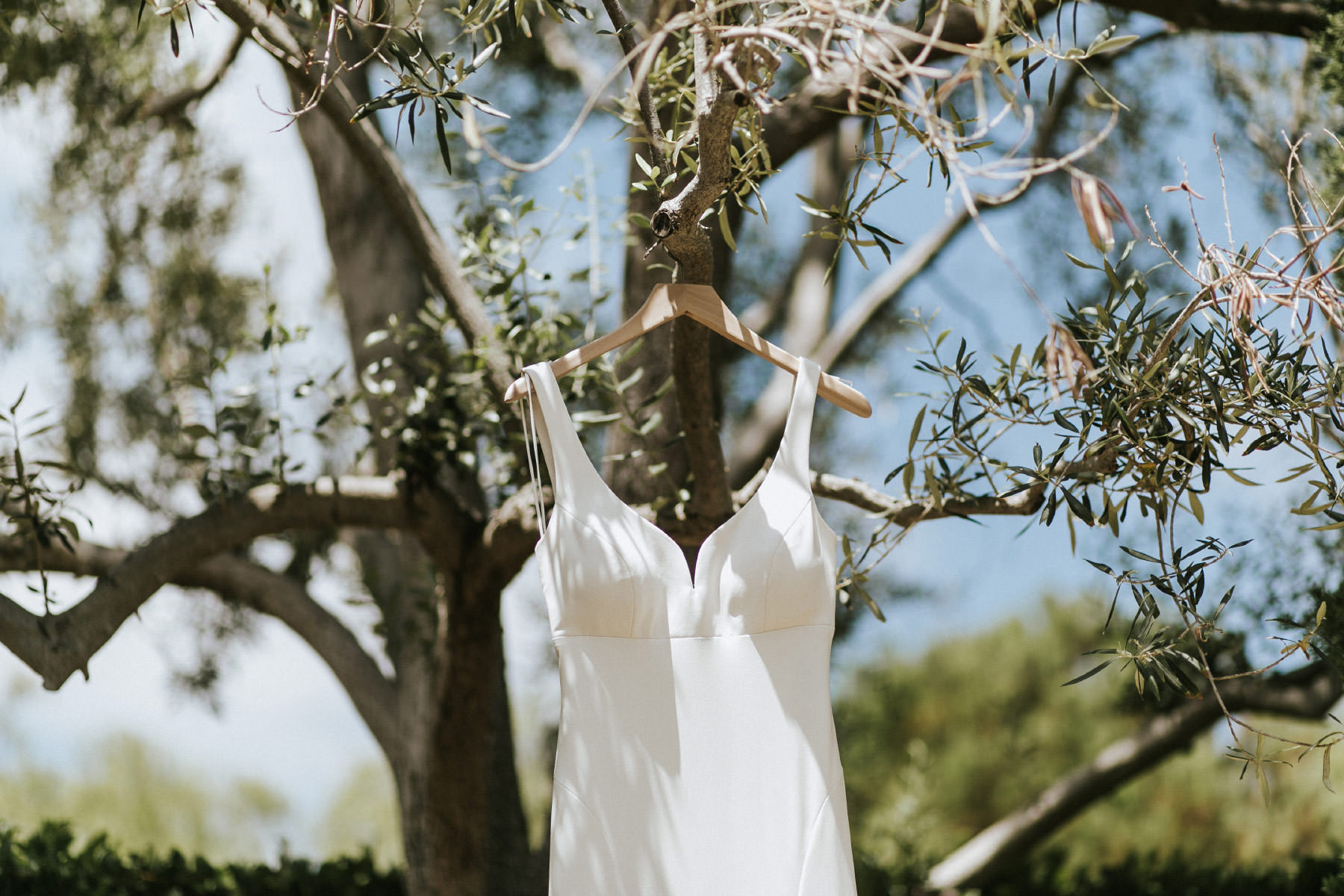 Wedding dress hanging in olive tree