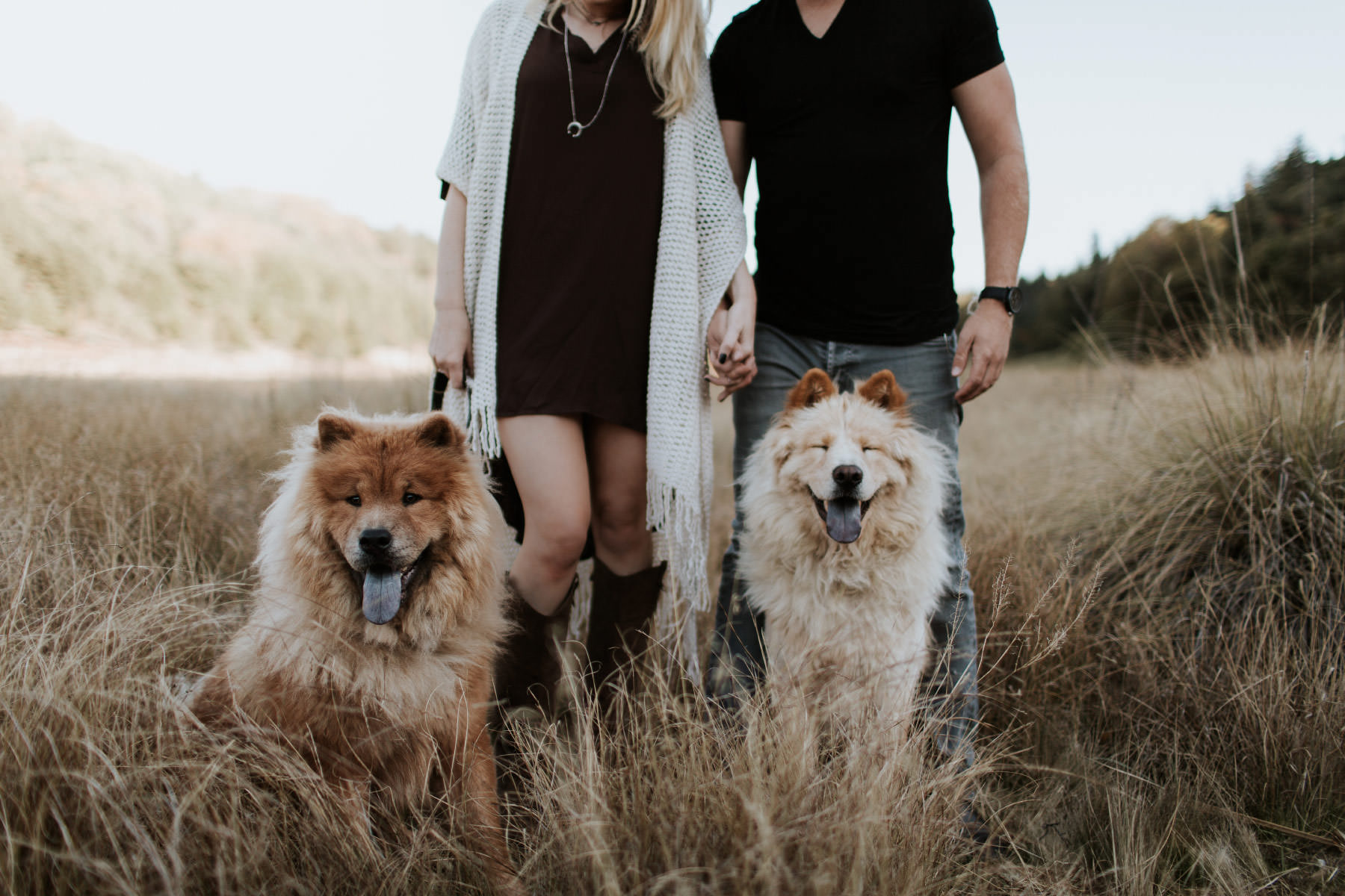 Two smiling Chow Chow dogs with their engaged owners