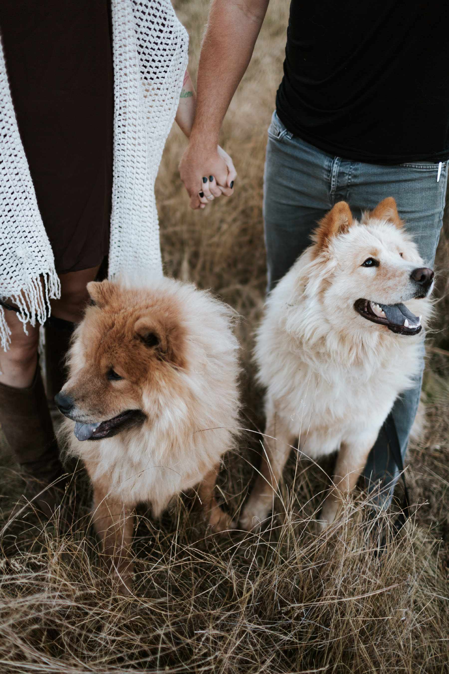 Two Chow dogs looking up at their owners holding hands