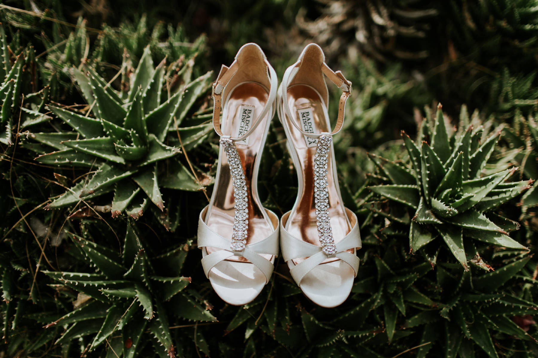 Brides shoes on bed of succulents at Leo Carrillo Ranch