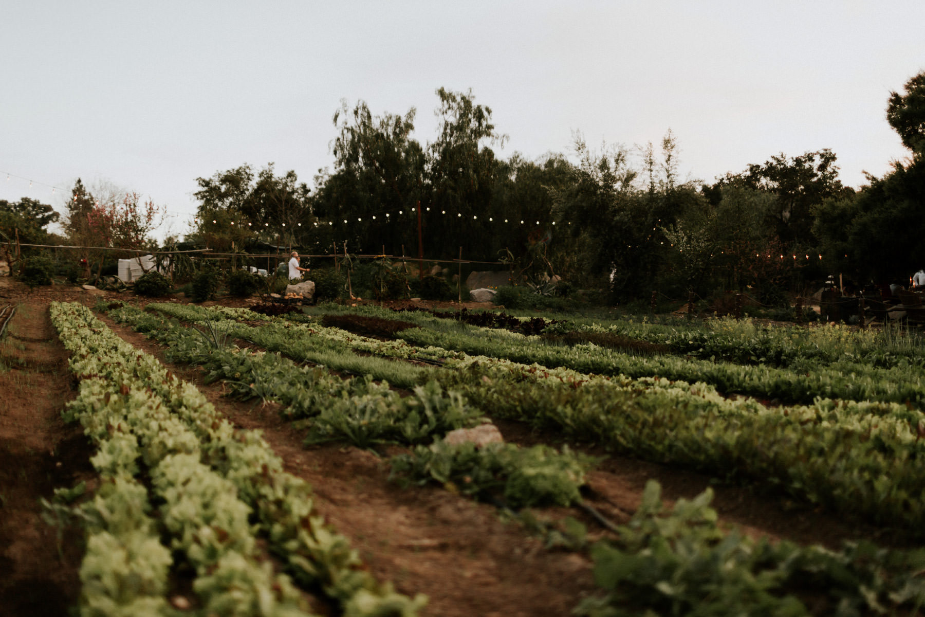 Organic farm at Terra Madre Gardens